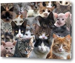 Постер Очень много кошек