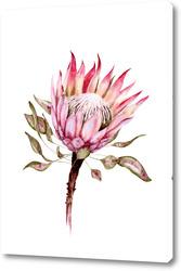 Розовый душистый горошек