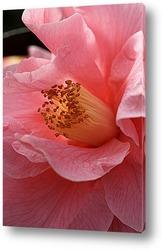 Пион — король цветов