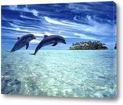 Постер Dolphin062