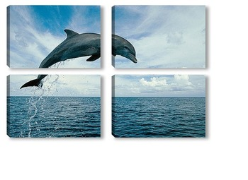 Модульная картина Dolphin090