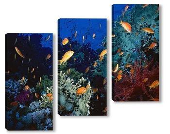 Модульная картина Fish046