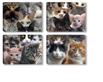 Очень много кошек