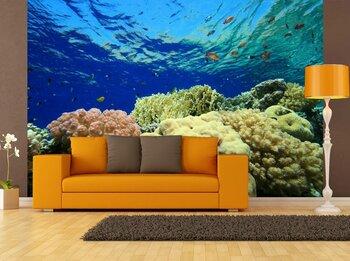 Фотообои Coral-05011027