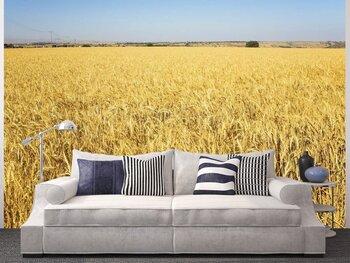 Фотообои Огромное пшеничное поле